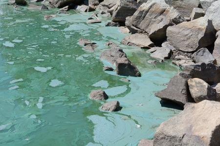 Green algae bloom pollution in lake by rocks at shoreline Reklamní fotografie