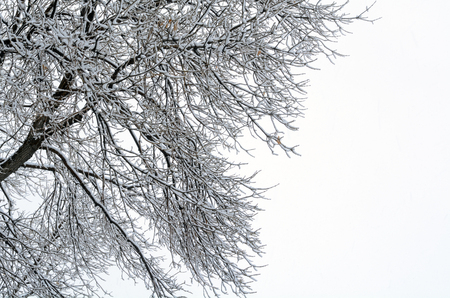 Bare winter tree branches covered in snow at the beginning of a snow storm against cloudy snowy sky Reklamní fotografie
