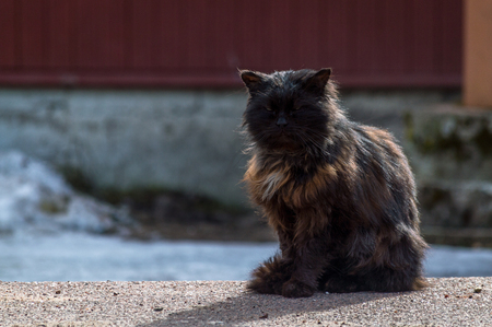 Black and brown cat and his shadow sitting on the ground, countryside spring