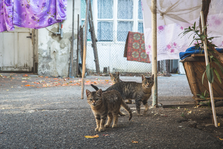 Cat sitting on the ground in a typical georgian yard with colourful clothes and linen drying on a string, Tbilisi, Georgia. Imagens