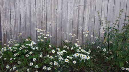 garden flowers near bench