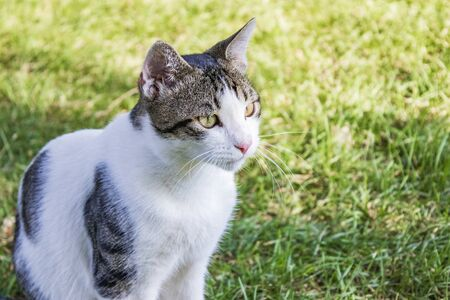 Cute and sweet cat on the natural garden
