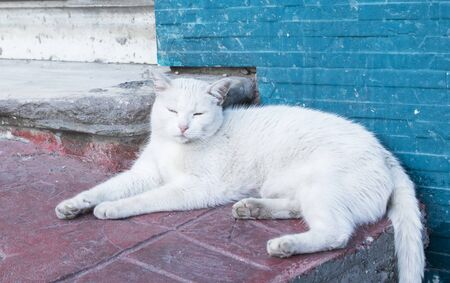 Cute and sweet white cat sleeping on the street Stockfoto
