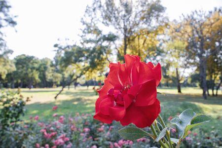 beautiful flower on the nature garden