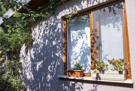 flowered window of garden house, natural background Stockfoto
