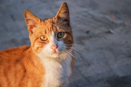 Cute and sweet yellow cat on the street 免版税图像