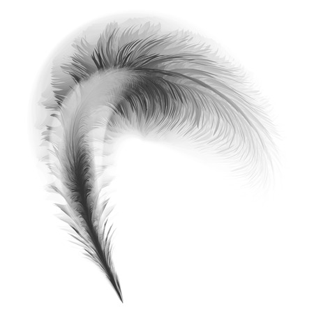 a feather: feather