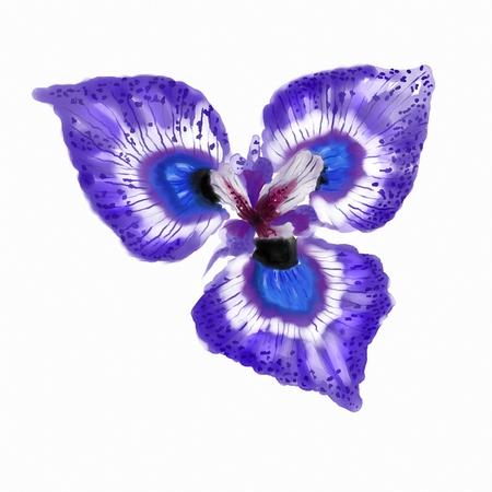panting: Watercolor Tropical Flower