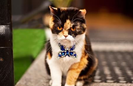 very aggressive cat on street Stock Photo - 15665605