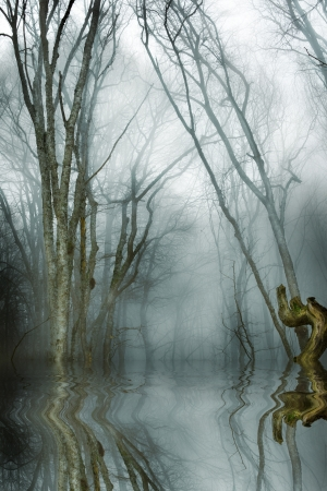 dark forest with fog and cold light  Stock Photo