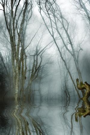 donker bos met mist en koud licht