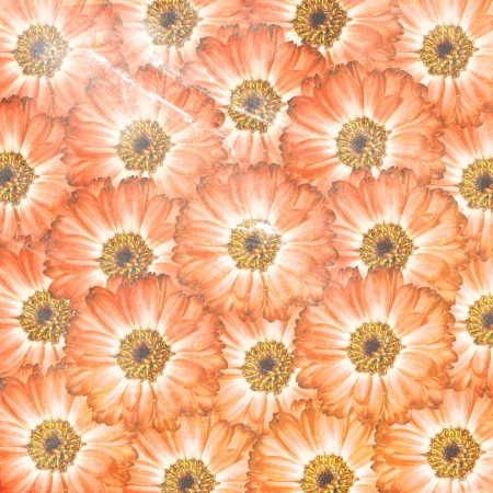 orange flower background photo