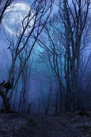 暗い夜の森 agaist 満月 写真素材