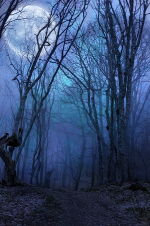 scary forest: dark night forest agaist full moon Stock Photo
