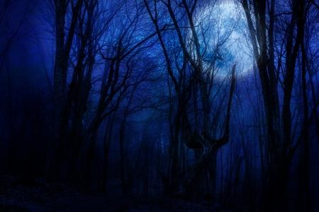 dark night forest agaist full moon Stock Photo