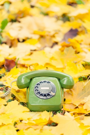 green vintage phone in yellow leaves photo