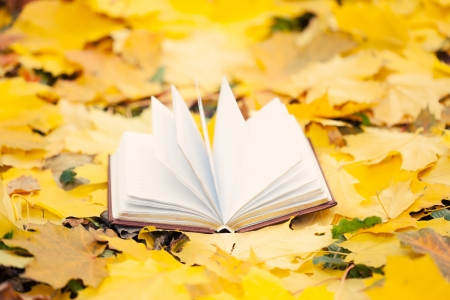 opened book laying in yellow leaves photo