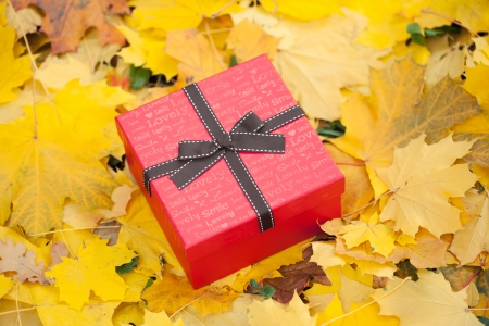 red gift box: red gift box with bow in yellow leaves Stock Photo