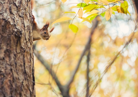 Squirrel in autumn park  photo