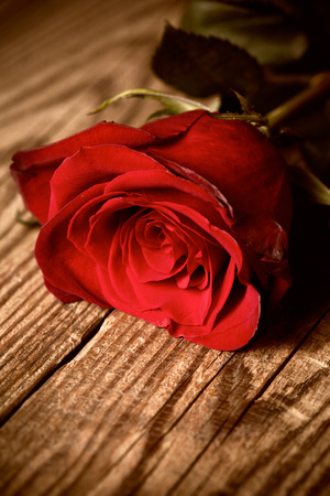 paperboard: Red rose on wooden table