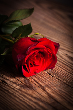 Red rose on wooden table  photo