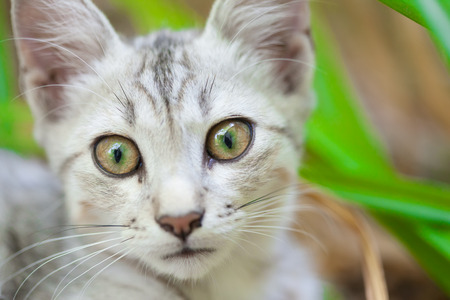 domestic animal: Close-up of a street cat wild cat domestic animal