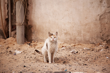 displaced: Street homeless cat, in Egypt
