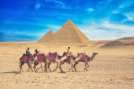 pyramid egypt: GIZA, EGYPT - JAN 31, 2015: Bedouins on camel near of great pyramid in egypt