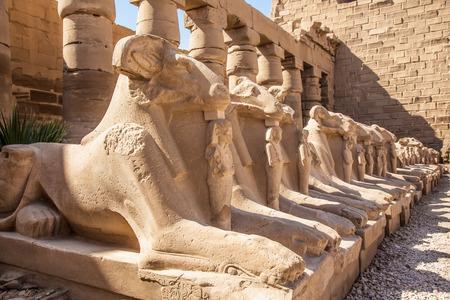 Avenue of the ram-headed Sphinxes. Karnak Temple. Luxor, Egypt photo