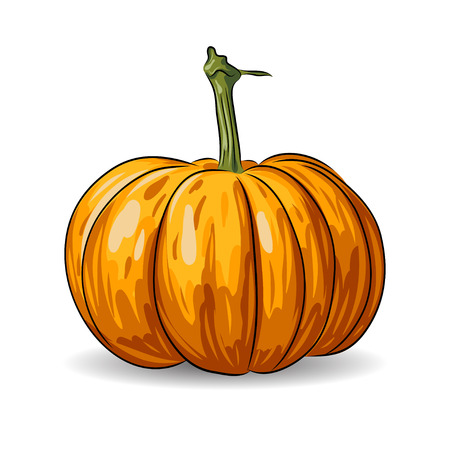 photorealism: vector pumpkin isolated on white background. EPS