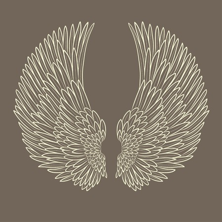 bird wing: vector pair of angel wings in contour. EPS Illustration