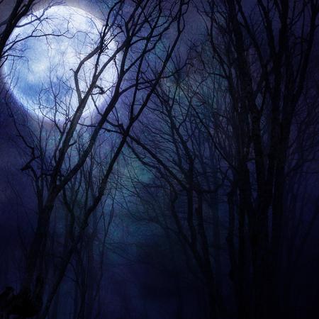 dark night: dark night forest agaist full moon Stock Photo