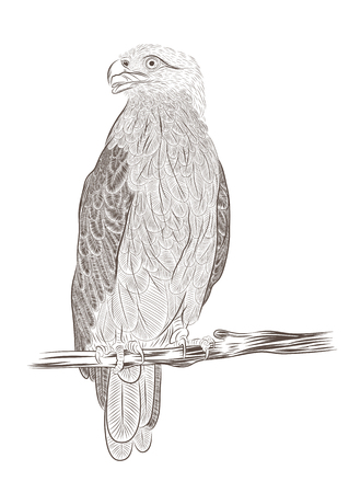vector eagle sitting on branch in contour