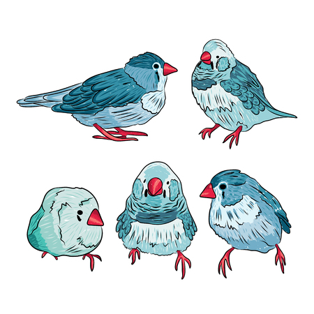 sparrows: vector cute sparrows in blue and red colors. EPS