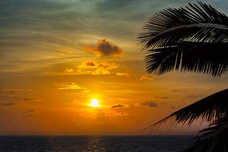 Beautiful sunset with palm and clouds