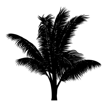 vector illustration of tropical tree silhouette. EPS