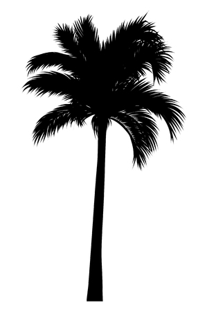 vector illustration of tropical palm silhouette. EPS