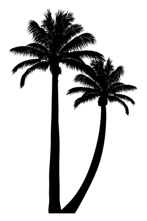 Illustration of tropical palm silhouette. Illustration