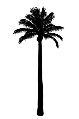Illustration of tropical palm silhouette. Иллюстрация