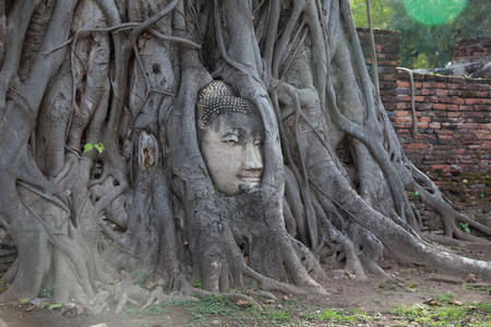 Stone head of Buddha surrounded by bodhi tree's roots in Wat Prha Mahathat Temple in Ayutthaya, Thailand 版權商用圖片