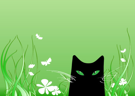 green eyes: black cat with green eyes