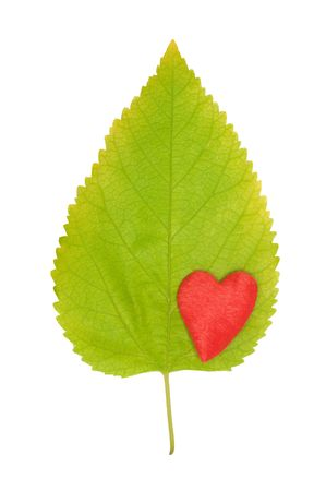 red  heart on the green leaf photo
