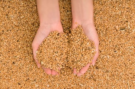 agronomics: a handful of grains in the womans hands