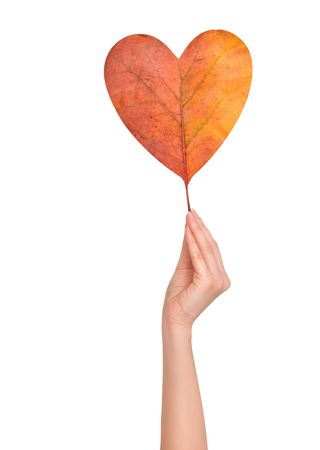 woman holding autumn leaf in the  shape of heart photo