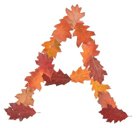 letter A made of oak autumn leaves  photo