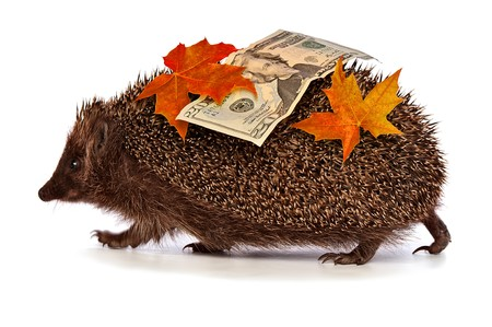 hastens: The hedgehog in motion hastens home from the bank carrying twenty percent dollar profit
