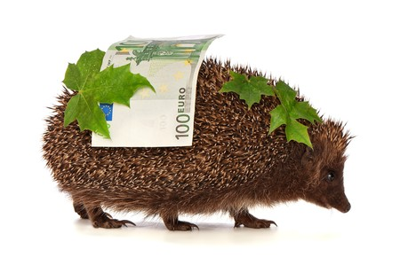 The hedgehog in motion hastens home from the bank carrying percent hundred euro profit Stock Photo - 7498776