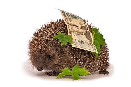 hastens: The hedgehog in motion hastens home from the bank carrying percent hundred dollars profit