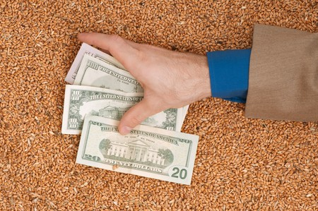 Monetary crop as a symbol of success of sale of a new crop of wheat Stock Photo - 7830365