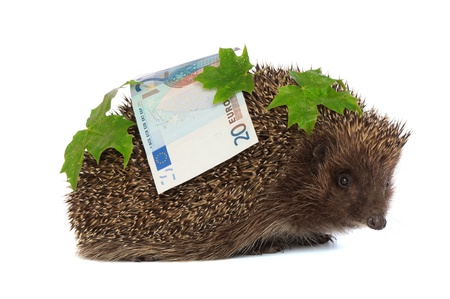 The hedgehog in motion hastens home from the bank carrying percent hundred euro profit Stock Photo